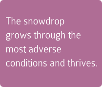 The snowdrop grows through the most adverse conditions and thrives.